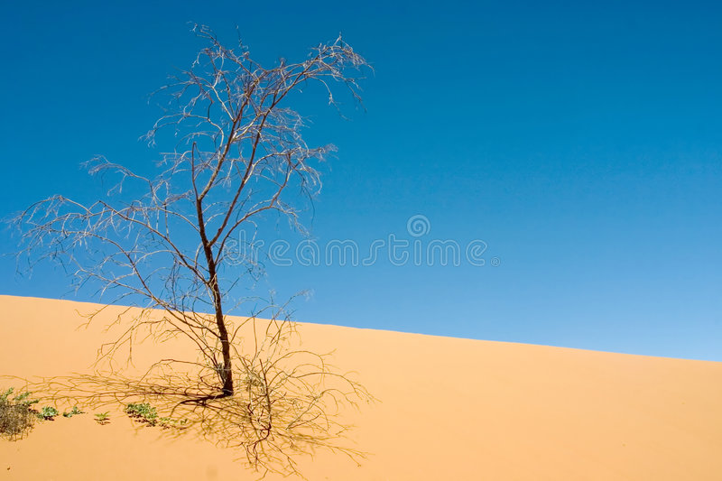 Dying. Little Sandhill, NSW royalty free stock photography