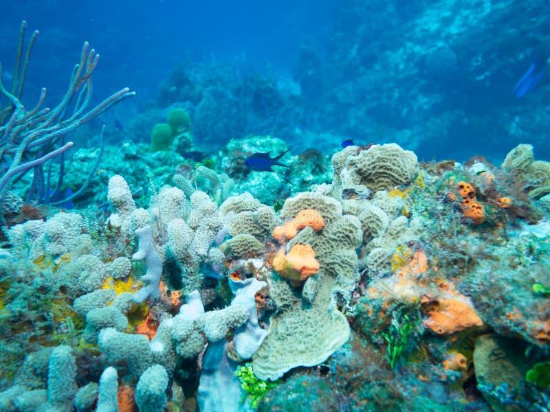 Dyka av Isla Mujeres, Mexiko royaltyfri foto