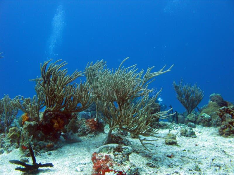 Dyka i tropiska hav royaltyfria bilder
