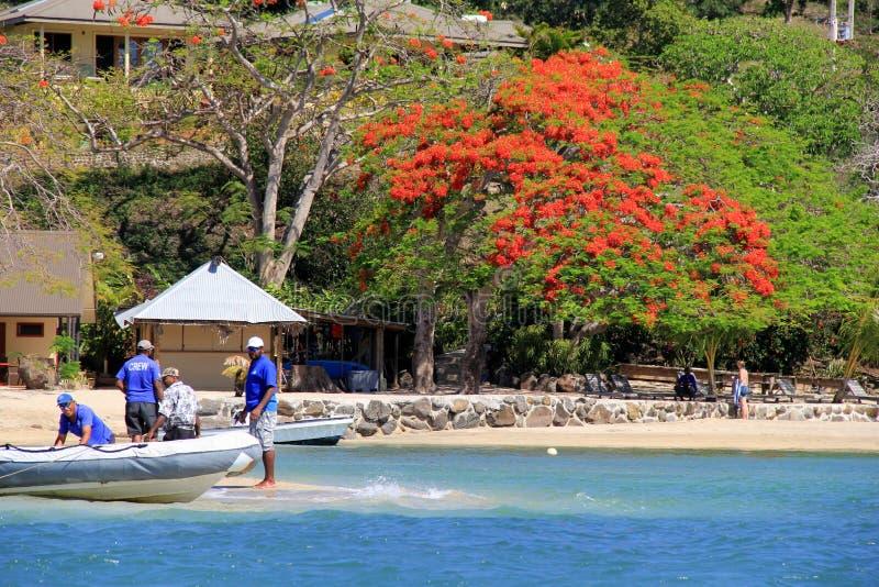 Dyka laget på kanten av den Volivoli strandsemesterorten, med den härliga färgen av ett träd som är bekant som jul, Fiji, 2015 arkivbild