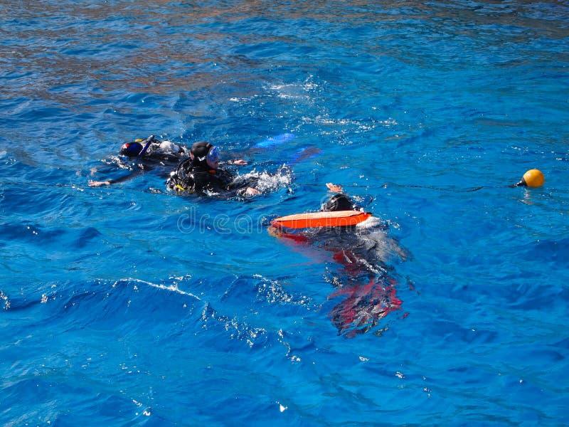 Dyka på det röda havet royaltyfri bild