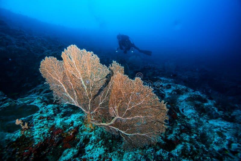Dykapparatdykning arkivbilder