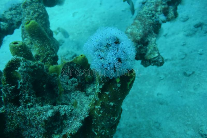 Dykapparatdykning i Aruba arkivfoto