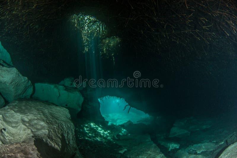 Dykapparatdykning i casaen Cenote, Mexico arkivbild