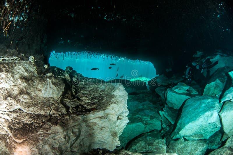 Dykapparatdykning i casaen Cenote i Mexico royaltyfri foto