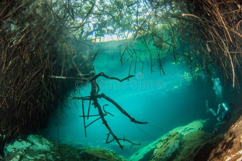 Dykapparatdykning i casaen Cenote i Mexico arkivbild