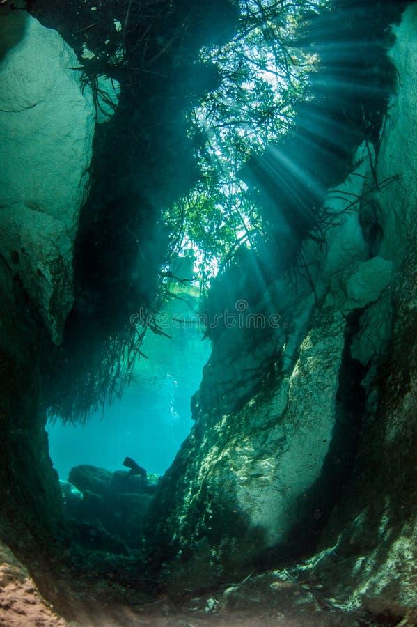 Dykapparatdykning i casaen Cenote i Mexico royaltyfri bild