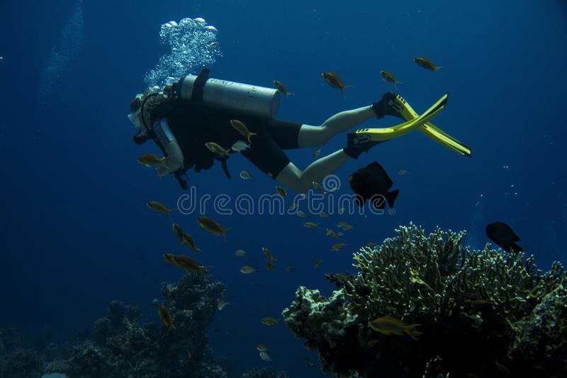 dykare Coral Reef arkivfoto