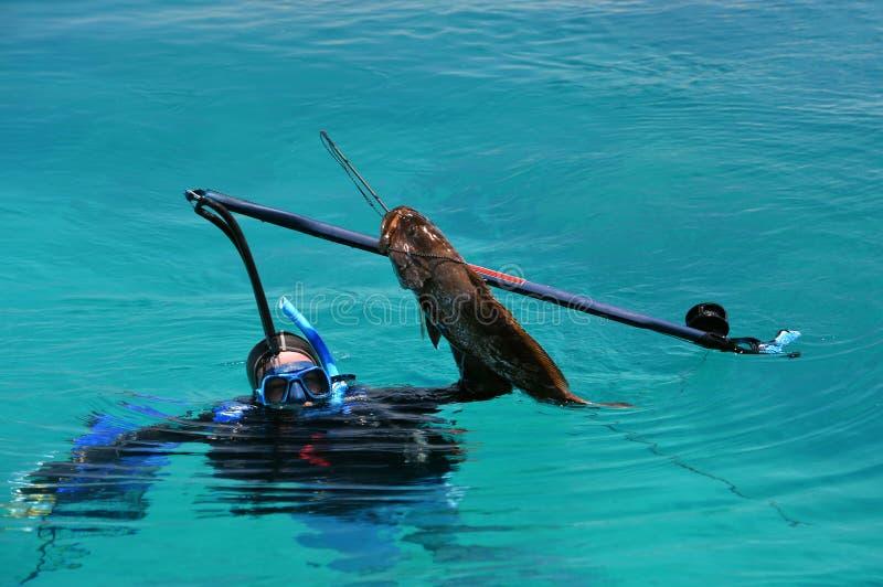 Dykare fångad svart havsaborrefisk arkivbild
