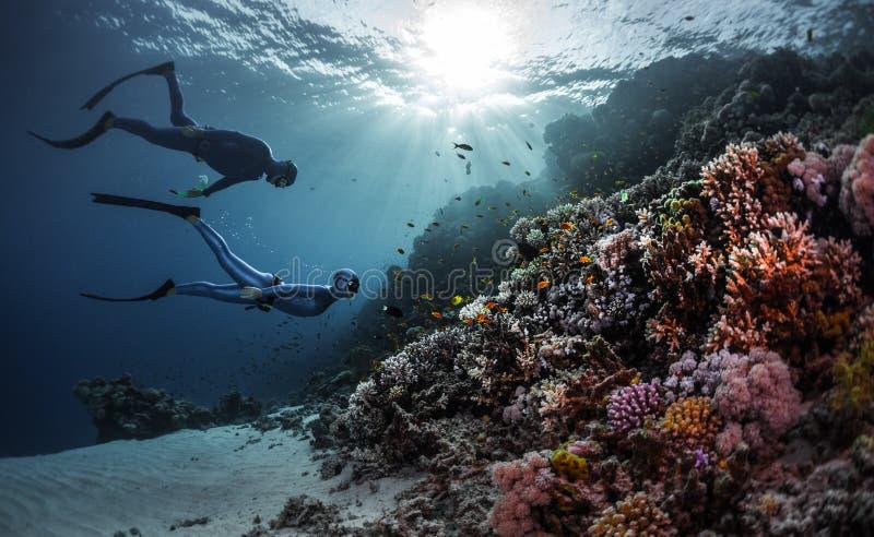 dykare frigör arkivfoton