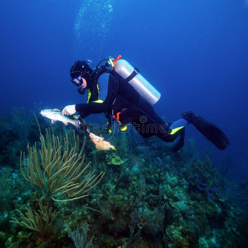 Dykare Hunting Fishes royaltyfri fotografi