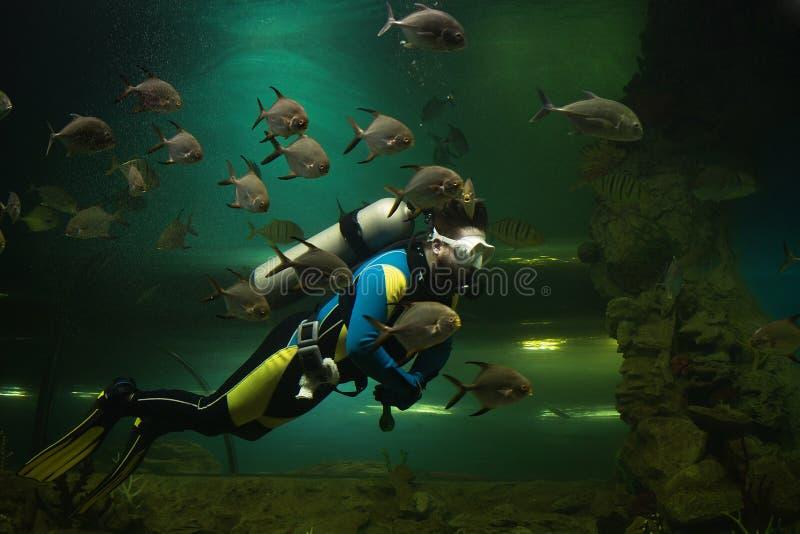 Dykare i akvariet arkivbilder
