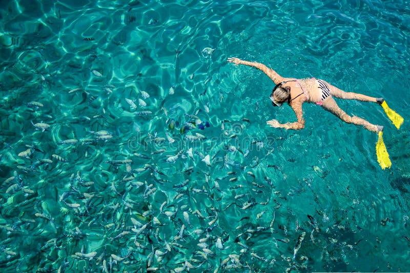 Dykare med fena som svävar i havet i klart vatten, royaltyfri bild