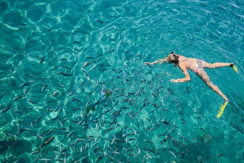 Dykare med fena som svävar i havet i klart vatten, arkivbilder