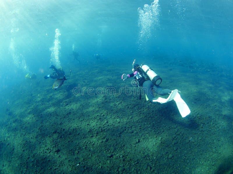 Dykare med korall royaltyfria foton