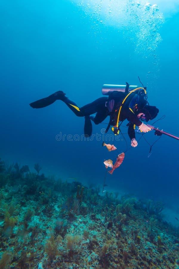 Dykare med speargun och döda fiskar arkivbild