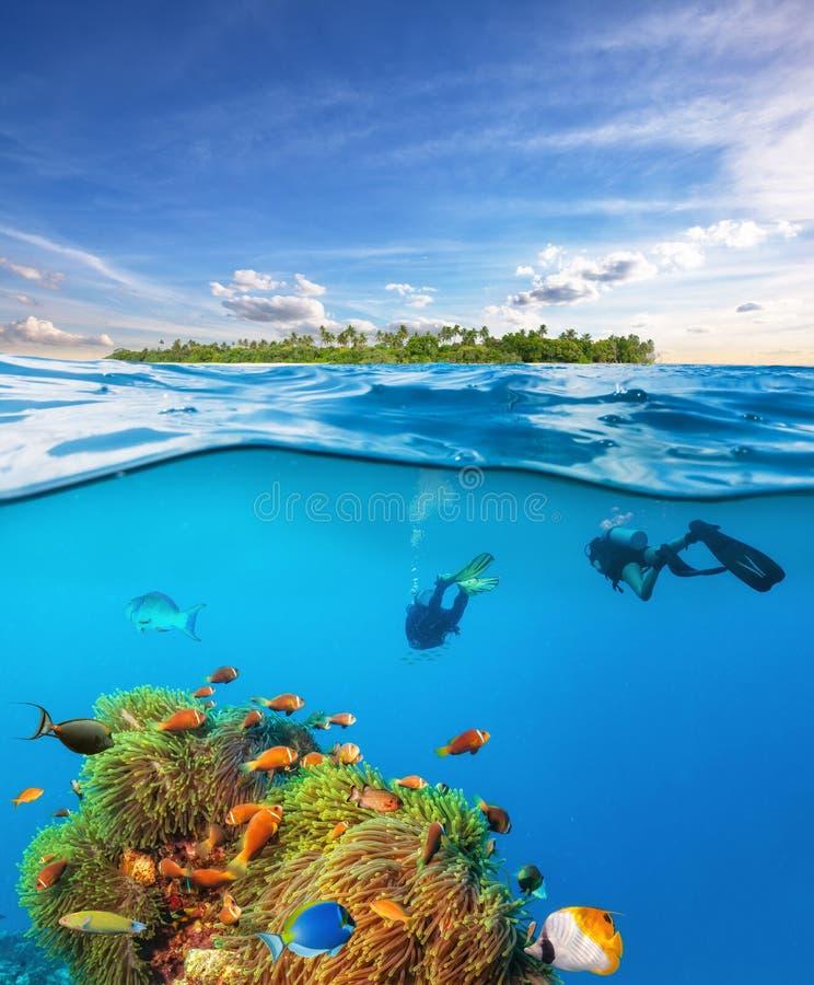 Dykare nedanför vattnet ytbehandlar undersökande havsliv royaltyfria bilder