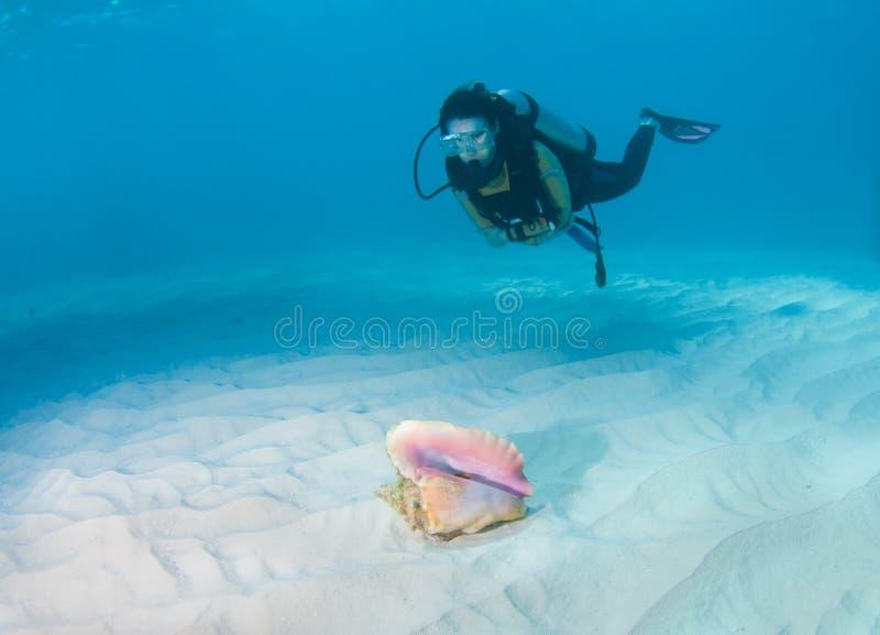 Dykare och conchen beskjuter arkivbilder