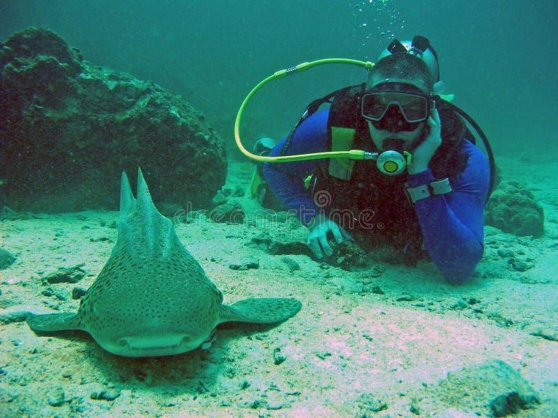 Dykare och haj, Thailand royaltyfri foto