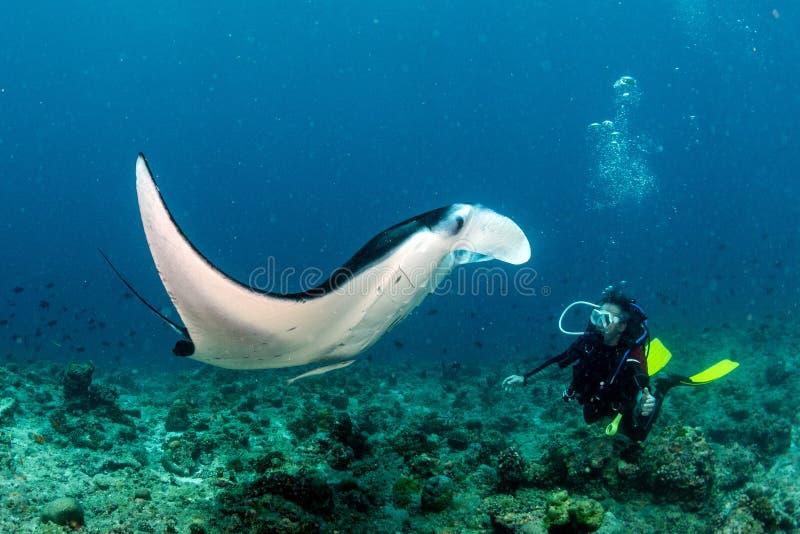 Dykare och Manta i den blåa havbakgrundsståenden royaltyfria bilder