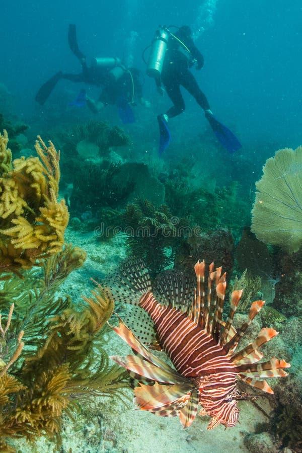 Dykare och marin- djur arkivbilder