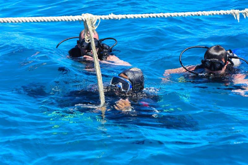 Dykare på det klar och turkosRöda havet på immersion i härliga koraller och färgrik fisk fotografering för bildbyråer