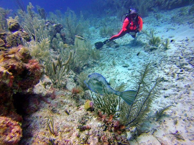 Dykare som håller ögonen på en fisk i fjärdöarna av Belize arkivfoto
