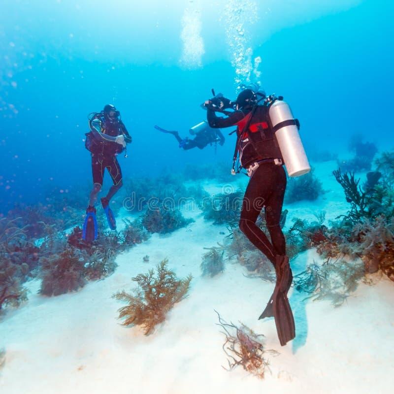 Dykare Takes Photos Underwater arkivbild