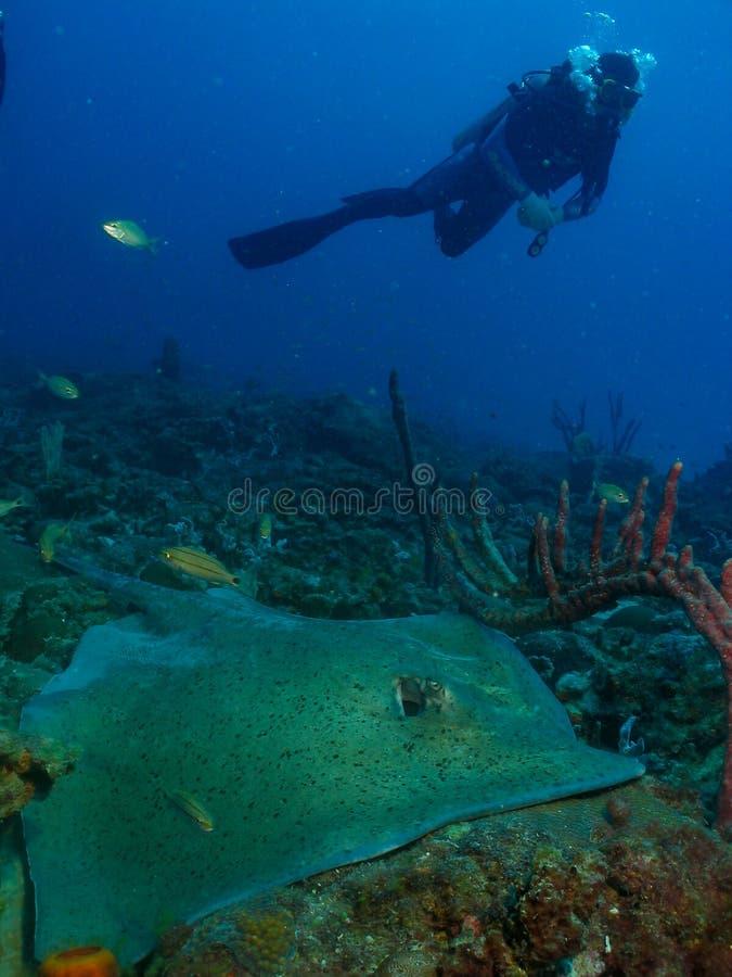 Dykare undervattens- Ceará, Brasilien fotografering för bildbyråer