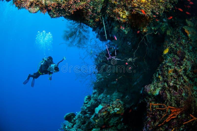 Dykaresimning i Banda, Indonesien undervattens- foto arkivfoto