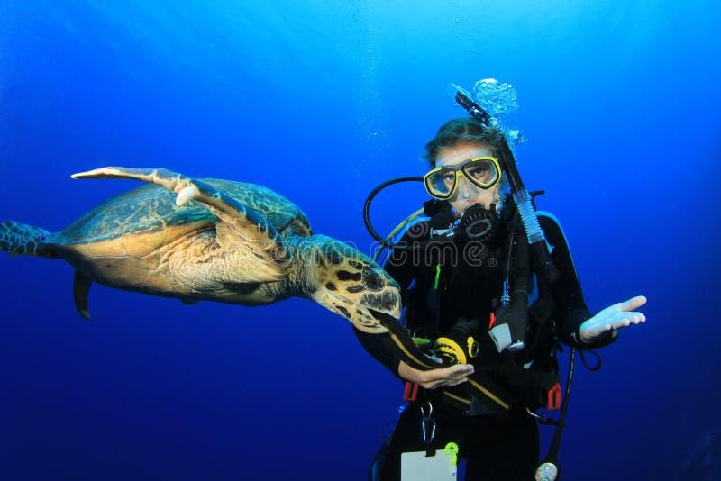dykaresköldpadda royaltyfri fotografi