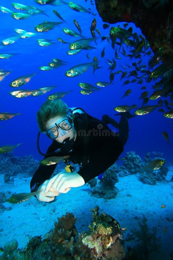 dykningscuba royaltyfri bild