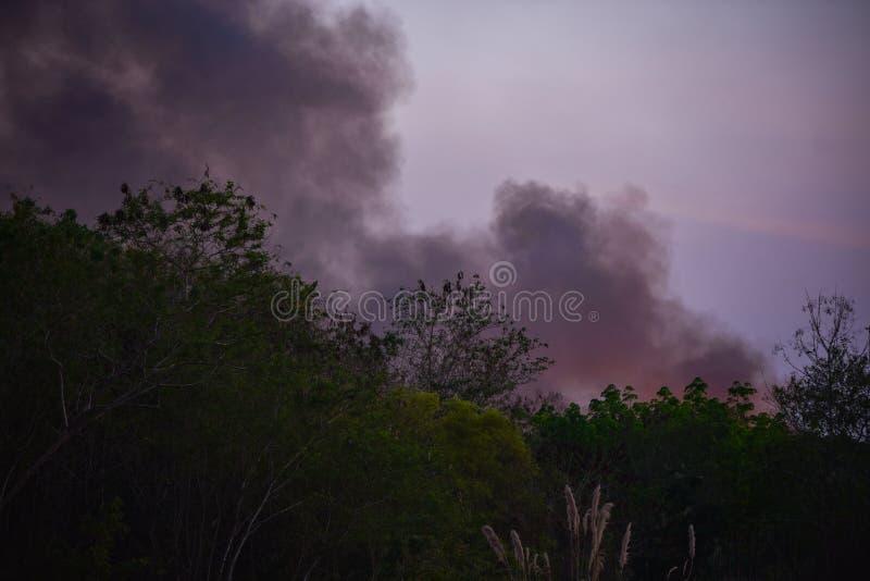 Dym na pożarniczym Lasowym drzewie obrazy royalty free