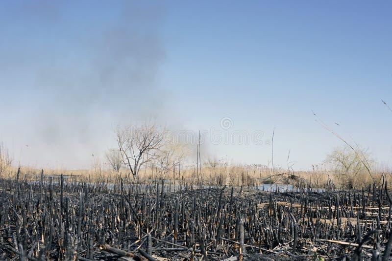 Dym nad stawem, palący pole zdjęcia stock