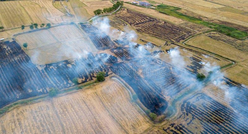 Dym od płonącej ryżowej ścierni fotografia stock