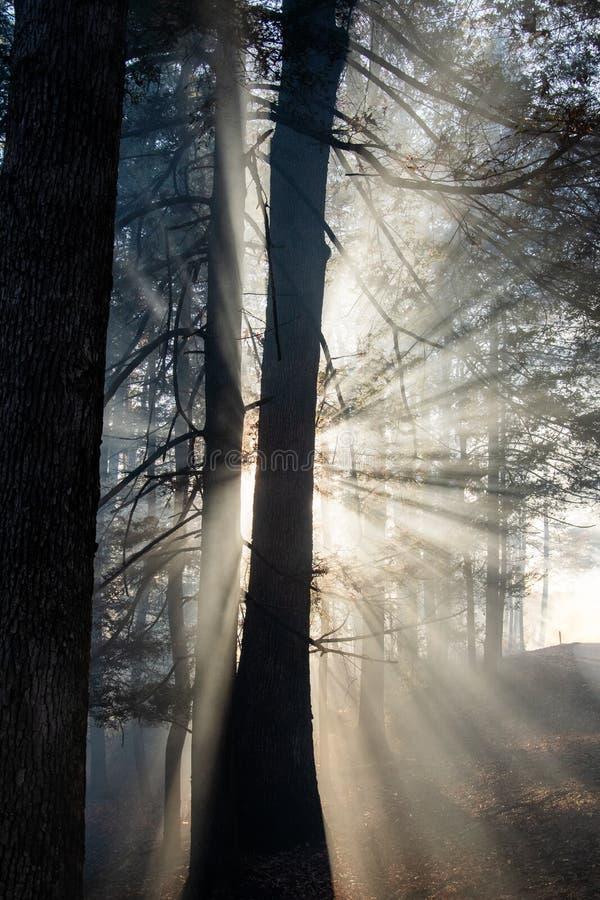 Dym po pożarze lasów zdjęcie royalty free