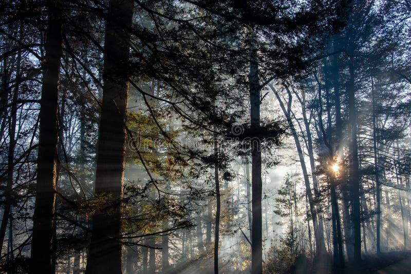 Dym po pożarze lasów zdjęcia royalty free