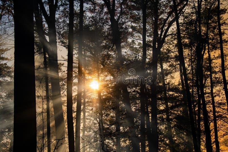 Dym po pożarze lasów obraz stock