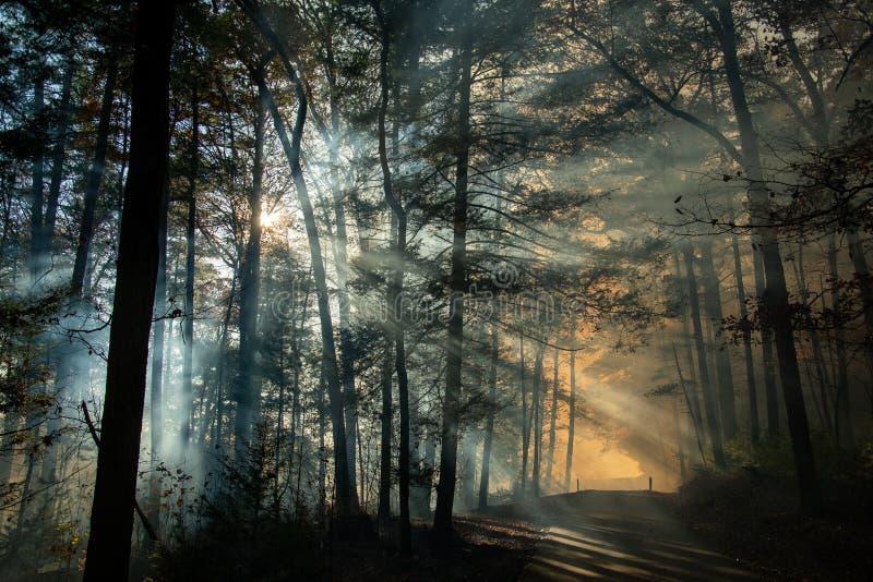 Dym po pożarze lasów obrazy royalty free