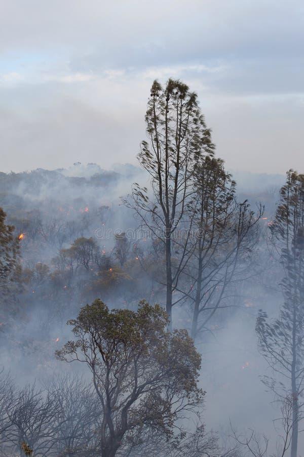 Dym w lesie obrazy royalty free