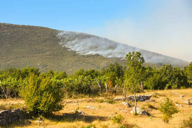 Dymna chmura od pożaru lasu zdjęcie stock