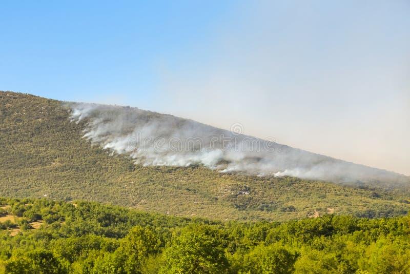 Dymna chmura od pożaru lasu obraz royalty free