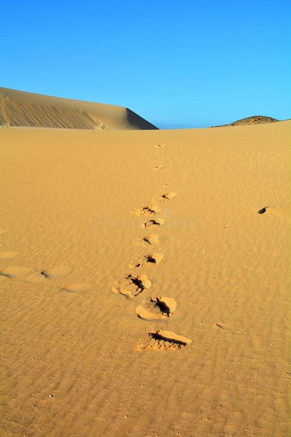 Dyn av Corralejo, Fuerteventura, kanariefågelöar, Spanien royaltyfri foto