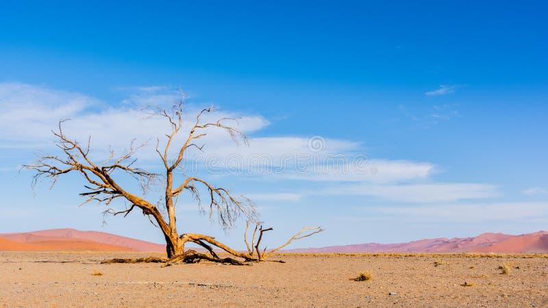 Dyn 45 av den Namib öknen arkivbild