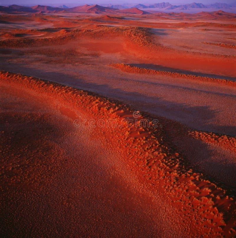 Dyn av den Namib öknen royaltyfria bilder