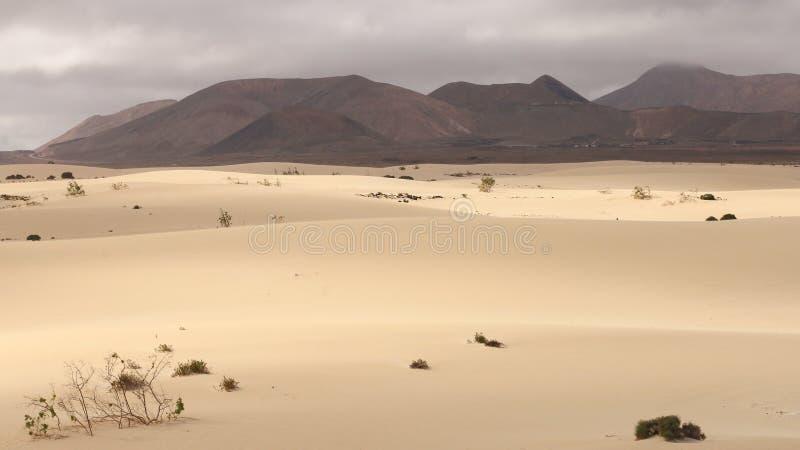 Dyn av Fuerteventura arkivbilder