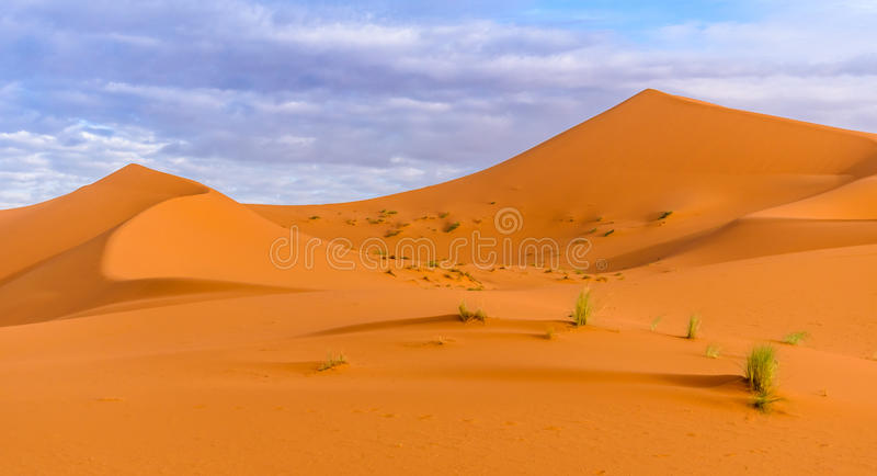Dyn för ergChebbi sand i marockansk öken i morgonen royaltyfri fotografi