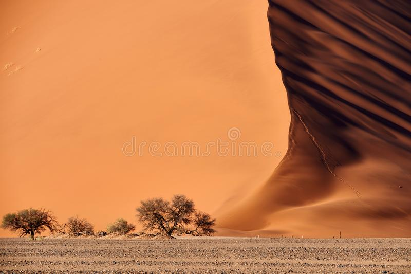 Dyn för Namib öken royaltyfri bild