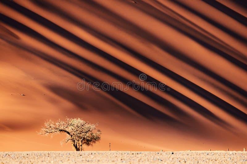 Dyn för Namib öken och ett träd arkivfoton