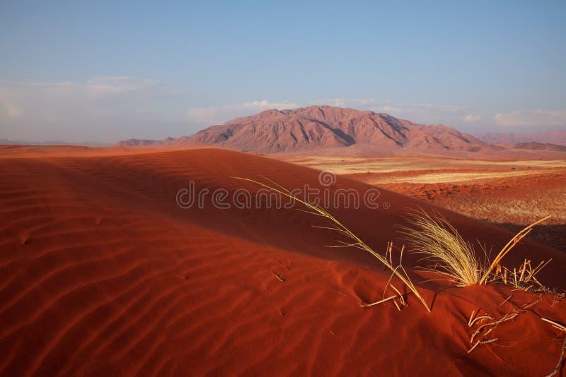 Dyn för Namib Rand Nature Reserve —sand av Wolwedans fotografering för bildbyråer